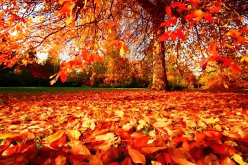 3 Amazing Autumn Ideas